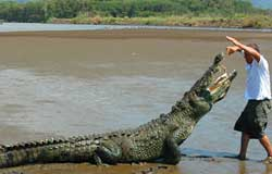 Crocodile Tour Jaco, Tours Jaco, Rentals Jaco, ATV Jaco, ATV Tours Jaco, ATV Rentals Jaco, Jaco Beach, Costa Rica, Off Road Vehicle Rentals Jaco, Off Road Tours, Extreme Sports,